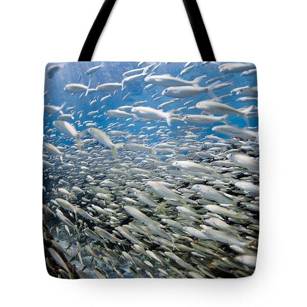 Fish Freeway Tote Bag by Sean Davey