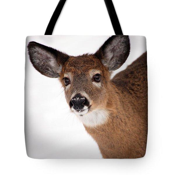 Fits Those Ears Tote Bag by Karol Livote