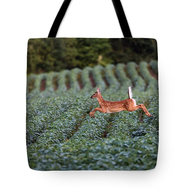 Flight Of The White-tailed Deer Tote Bag by Everet Regal