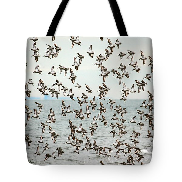 Flock of Dunlin Tote Bag by Karol  Livote