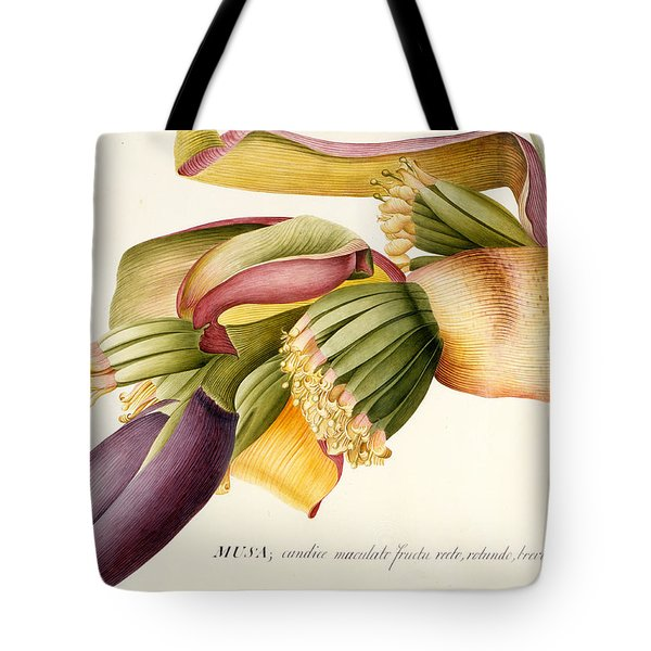 Flower Of The Banana Tree  Tote Bag by Georg Dionysius Ehret
