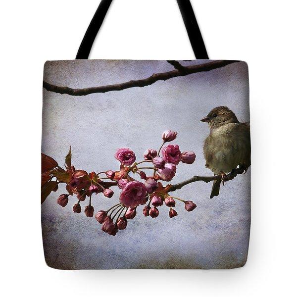 Fluffy Sparrow  Tote Bag by Barbara Orenya