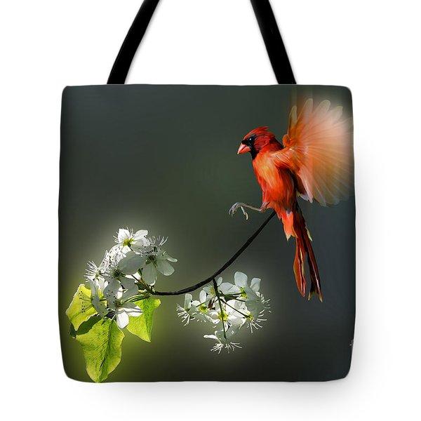 Flying Cardinal landing on branch Tote Bag by Dan Friend