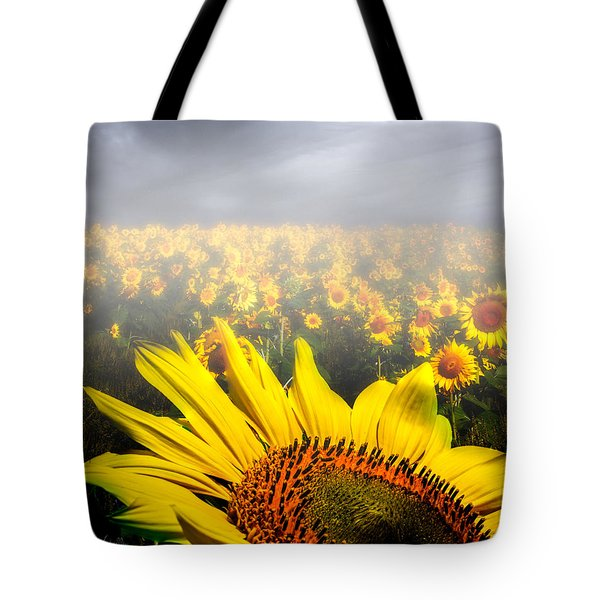 Foggy Field of Sunflowers Tote Bag by Bob Orsillo