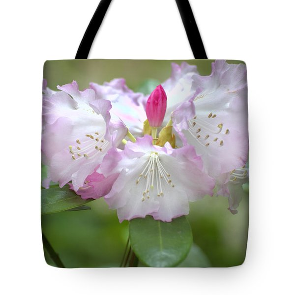 Frilly Pinks Tote Bag by Diego Re