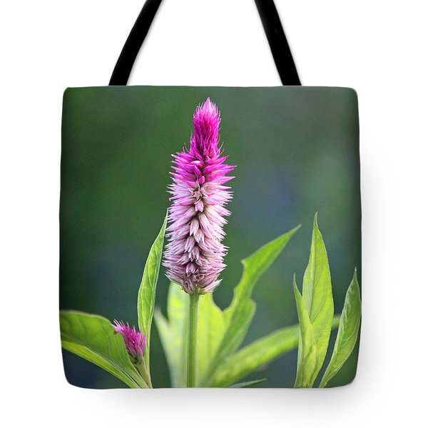 Fuchsia Spike Tote Bag by Suzanne Gaff