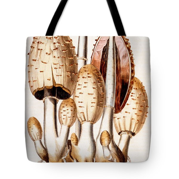 Fungi Tote Bag by English School