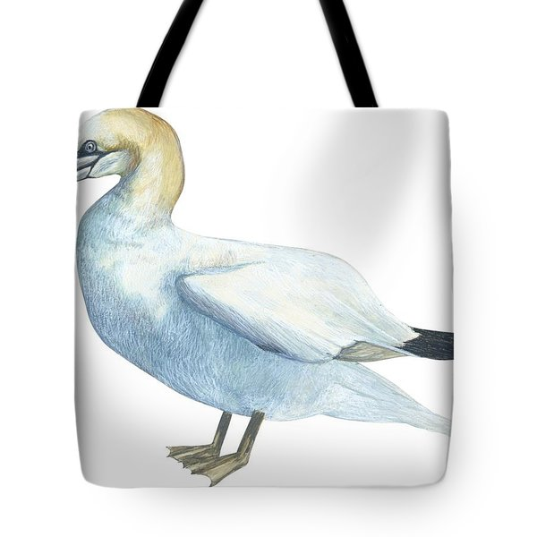 Gannet  Tote Bag by Anonymous