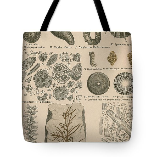 Geology And Paleontology 1886 Tote Bag by Science Source