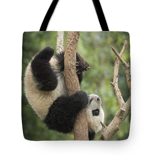 Giant Panda Cub In Tree Chengdu Sichuan Tote Bag by Katherine Feng