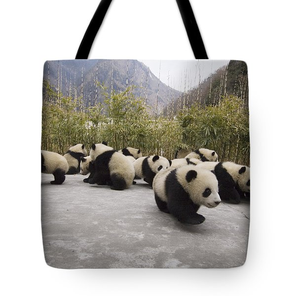 Giant Panda Cubs Wolong China Tote Bag by Katherine Feng
