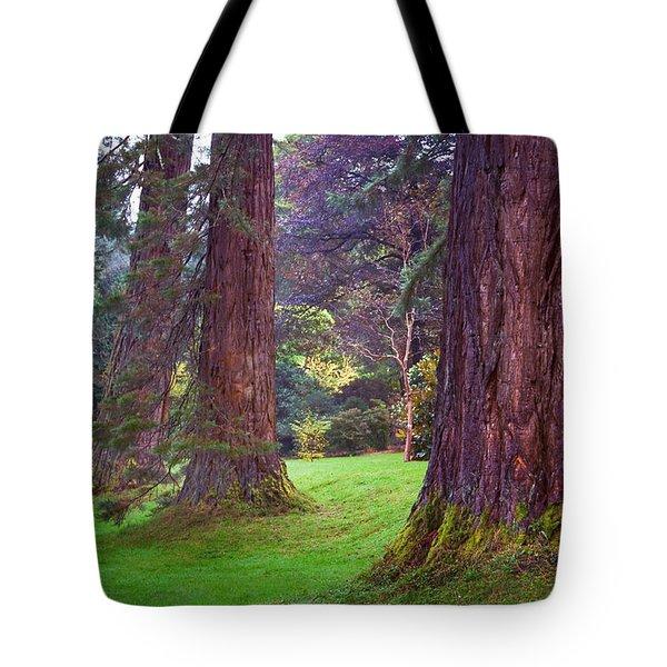 Giant Sequoias II. Benmore Botanical Garden. Scotland Tote Bag by Jenny Rainbow