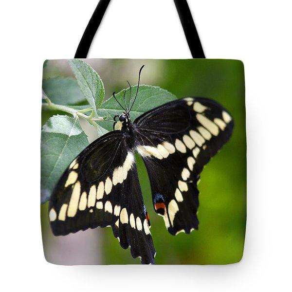 Giant Swallowtail Butterfly Tote Bag by Saija  Lehtonen