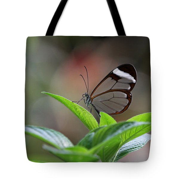 Glasswing Butterfly Tote Bag by Juergen Roth
