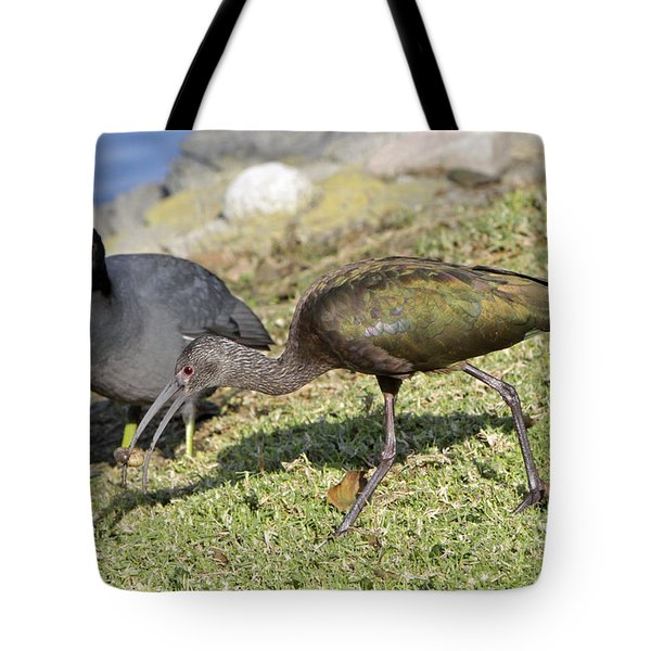 Glossy Ibis Tote Bag by Shoal Hollingsworth
