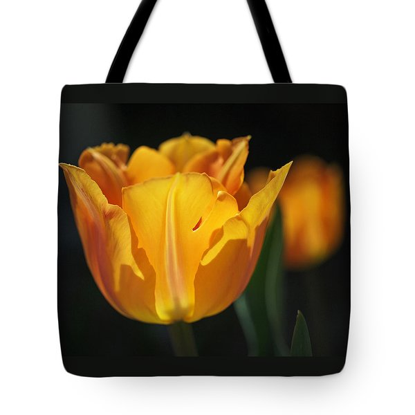 Glowing Tulips Tote Bag by Rona Black
