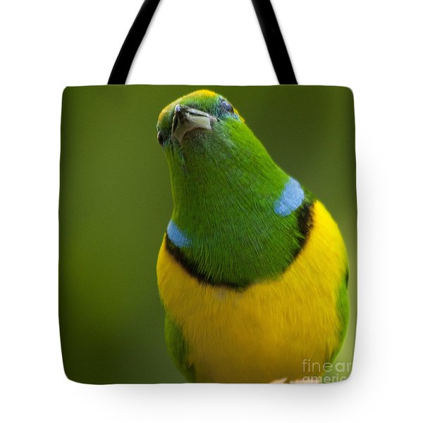 Golden-browed Chlorophonia - Chlorophonia Callophrys Tote Bag by Heiko Koehrer-Wagner