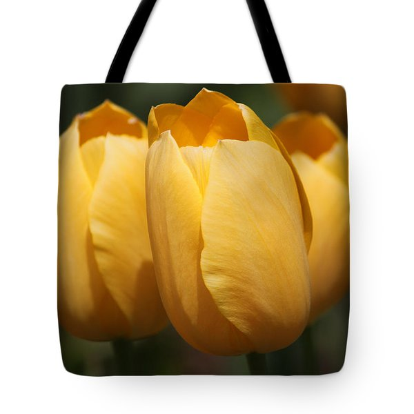 Golden Tulip Trio Tote Bag by Suzanne Gaff