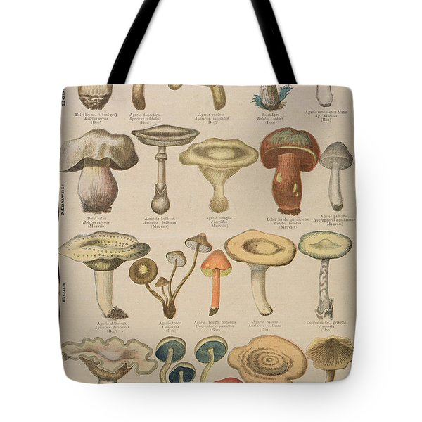 Good And Bad Mushrooms Tote Bag by French School