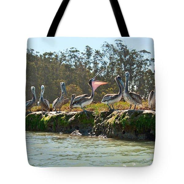 Gossip - Group Of Brown Pelican Pelecanus Occidentalis On The Elkhorn Slough. Tote Bag by Jamie Pham