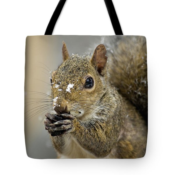 Gray Squirrel - D008392 Tote Bag by Daniel Dempster