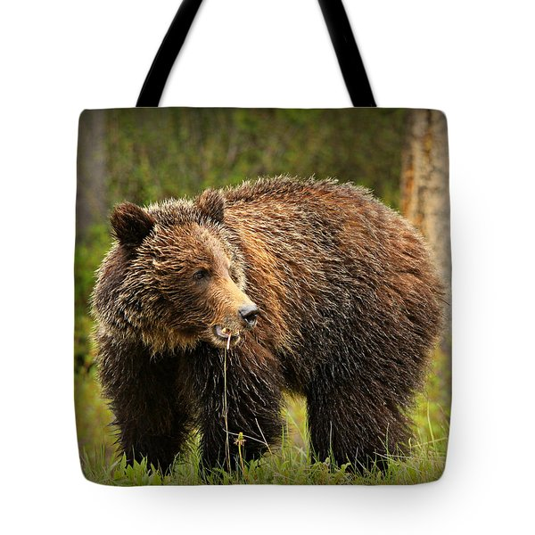 Grazing Grizzly Tote Bag by Stephen Stookey