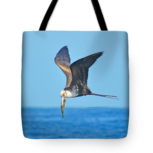 Great Frigate Bird Tote Bag by Chris Thaxter