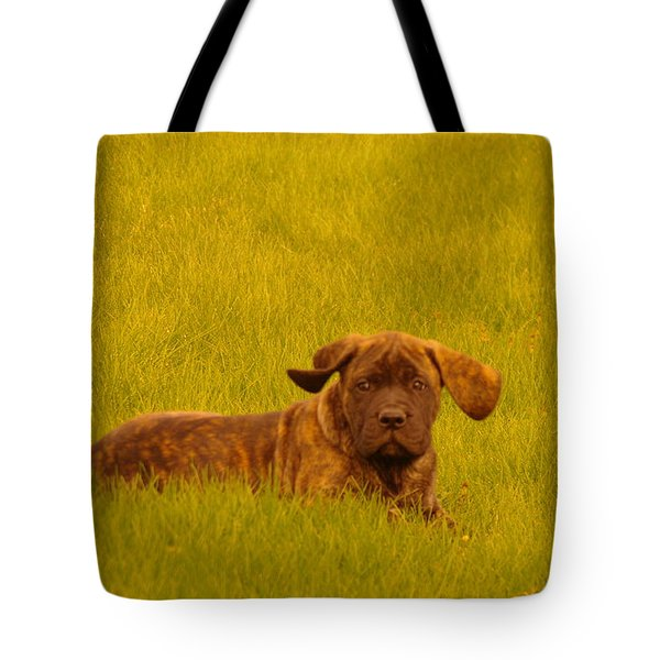 Green Grass And Floppy Ears Tote Bag by Jeff Swan