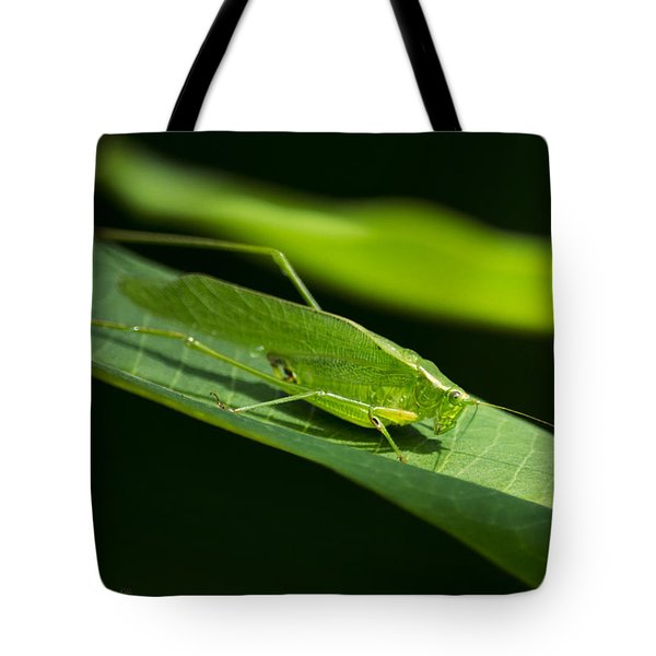 Green Katydid Tote Bag by Christina Rollo