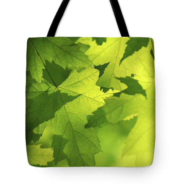 Green maple leaves Tote Bag by Elena Elisseeva