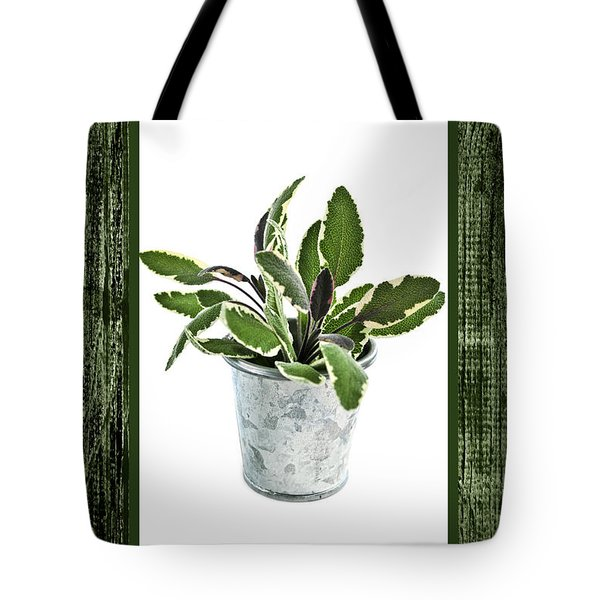 Green sage herb in small pot Tote Bag by Elena Elisseeva