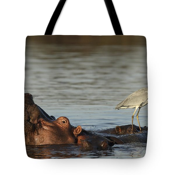 Grey Heron On Hippopotamus Kruger Np Tote Bag by Perry de Graaf