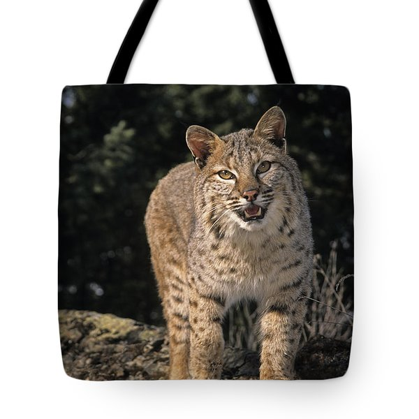G&r.grambo Mm-00006-00275, Bobcat On Tote Bag by Rebecca Grambo