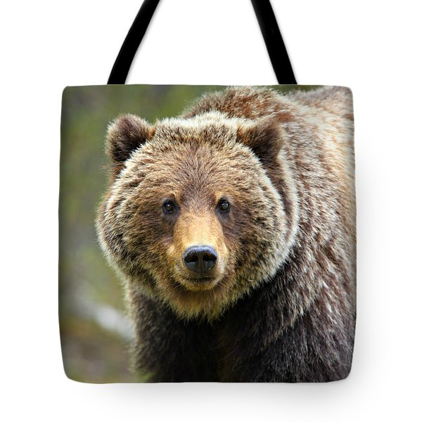 Grizzly Tote Bag by Stephen Stookey