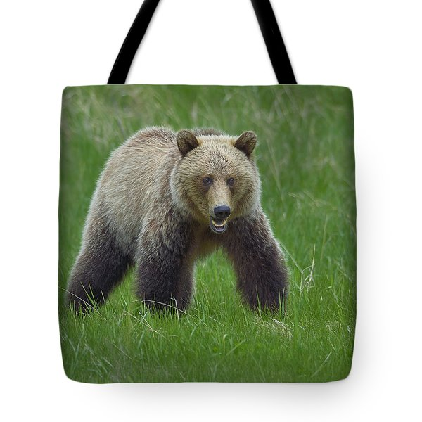 Grizzly Tote Bag by Tony Beck