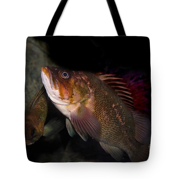 Gruper Fish 5d24129 Tote Bag by Wingsdomain Art and Photography