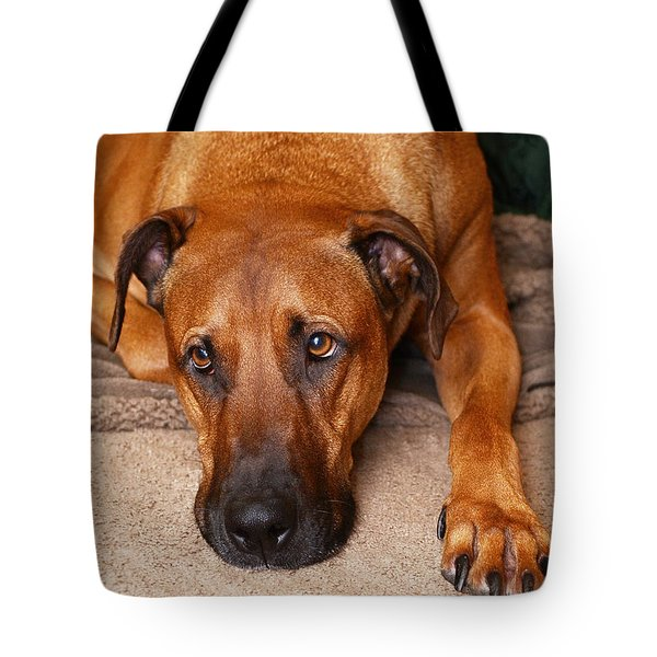 Guinness Tote Bag by Lisa Phillips