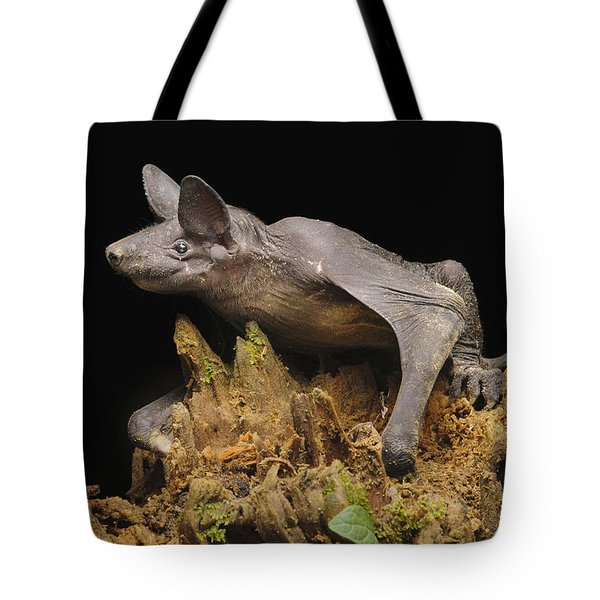 Hairless Bat Tibu Batang Ai Np Malaysia Tote Bag by Ch'ien Lee