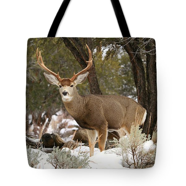 Handsome Buck Tote Bag by Donna Kennedy