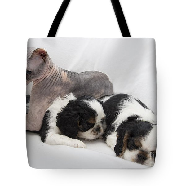 Hanging With The Dogs Tote Bag by Jeannette Hunt