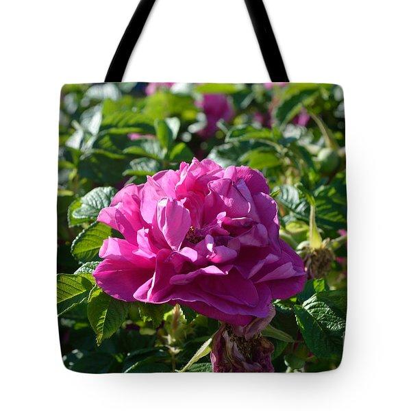 Hansa Rose At Dawn Tote Bag by Alys Caviness-Gober