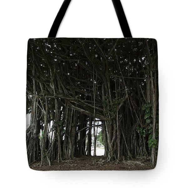 Hawaiian Banyan Tree - Hilo City Tote Bag by Daniel Hagerman