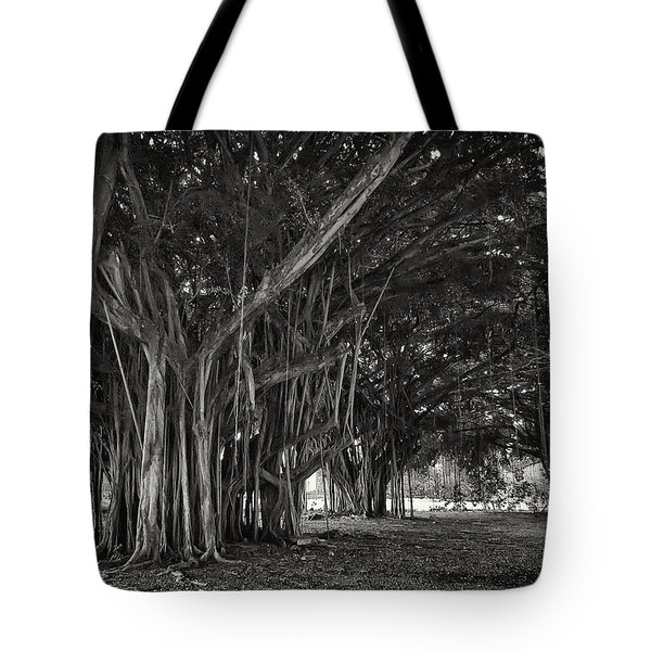 HAWAIIAN BANYAN TREE ROOT STUDY Tote Bag by Daniel Hagerman