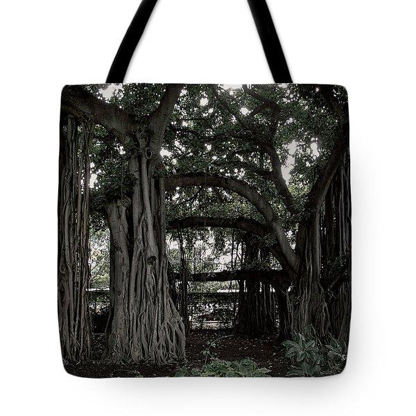 Hawaiian Banyan Trees Tote Bag by Daniel Hagerman