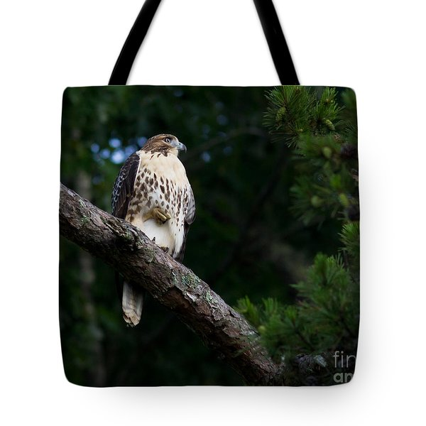 Hawk On Norris Lake Tote Bag by Douglas Stucky