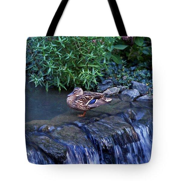 Hen Fall Tote Bag by Skip Willits