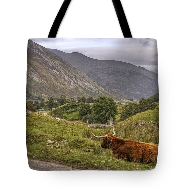 Highland Cow In Scotland Tote Bag by Jason Politte