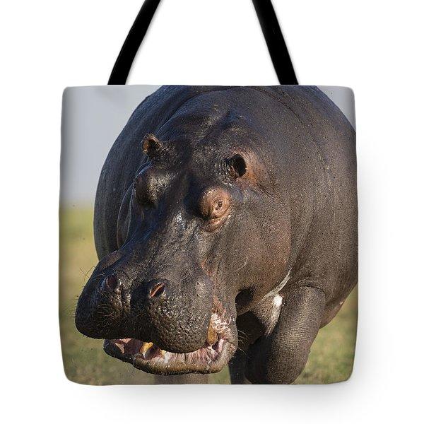 Hippopotamus Bull Charging Botswana Tote Bag by Vincent Grafhorst