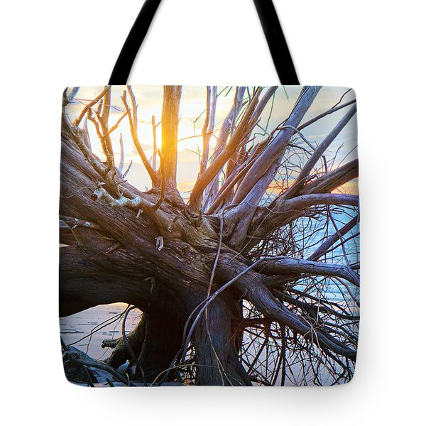 Historic Roots Tote Bag by Betsy A  Cutler