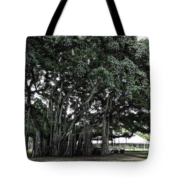 Honolulu Banyan Tree Tote Bag by Daniel Hagerman